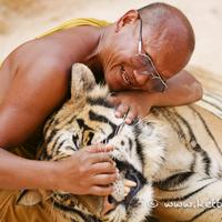 The monk and the tiger..