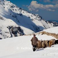 Herdsmen from the Dodra Kwar villages leading a large herd of Goat towards the Rupin pass and to the greener pastures of the Baspa valley.