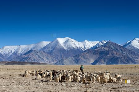 Tokung winter pastures at the Pangong lake