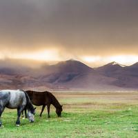 Dazzling sunlight over the Hanle grasslands