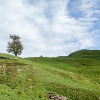 A lone tree on the Pandu Ropa meadows.