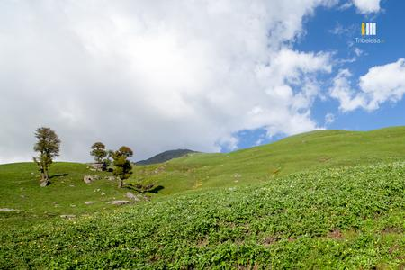 The sunny meadows of Pandu Ropa
