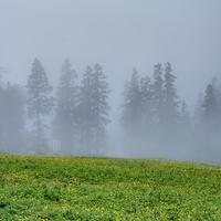 Foggy meadows