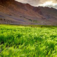 Sun setting over the lush green fields around Kaza in the Spiti valley.
