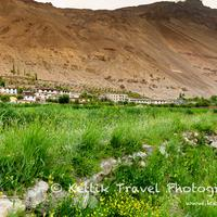 The Tabo village with its lush green fields in the foreground and the barren mountains in the background.