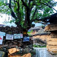 Signboards poining to the various guesthouses located in the Old Manali village.
