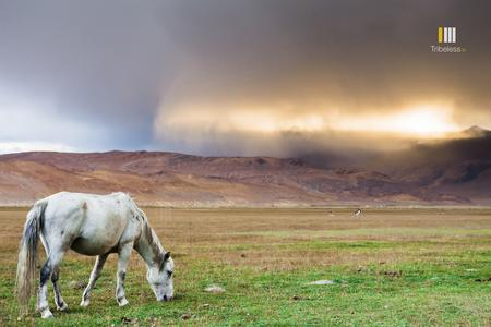 A Bolt from the Blue. Horses grazing in the fertile plains of Hanle.