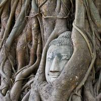 Stone Buddha in the tree roots
